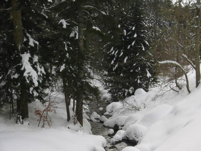 Rivière sous la neige