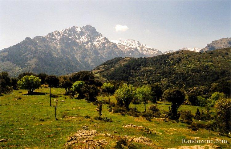 Forêt de Tartagine
