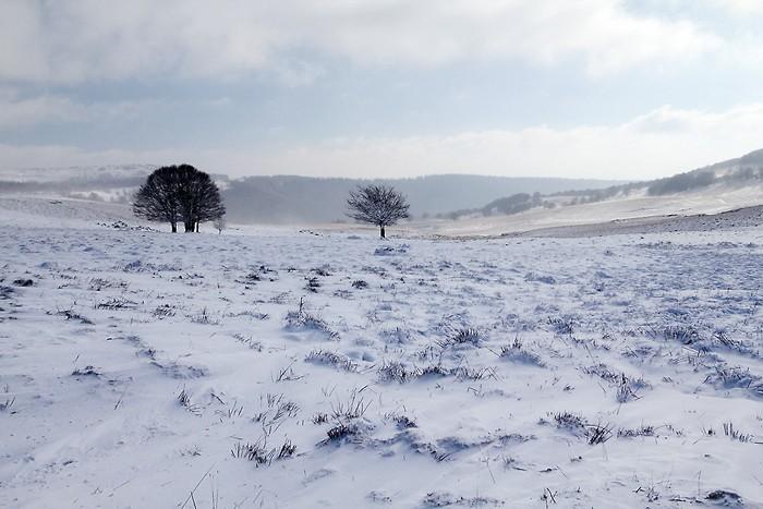 Plateau de l'Aubrac sous la neige