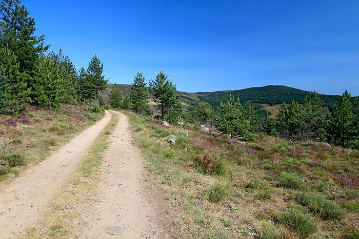 Sentier forestier au col du Sapet