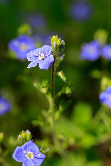 Fleur dans le trou de Bozouls