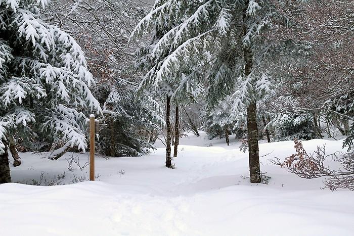 Randonnée pédestre : Randonnée dans la neige sur le sentier botanique de Laguiole