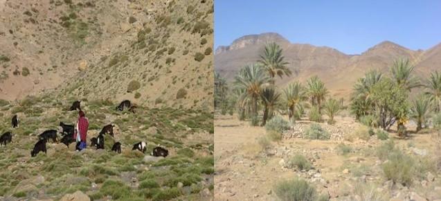 Randonnée pédestre : Randonnée et Trekking au Saghro Maroc