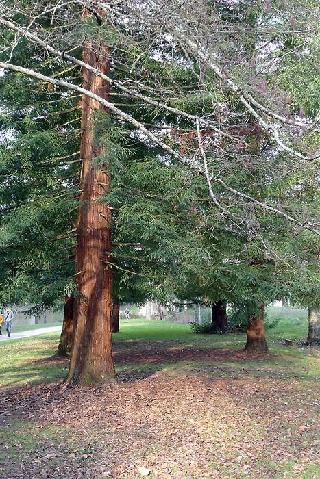 Balade dans le parc de Bourran 8