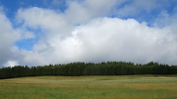 Forêt face à Aubrac, sur le Plateau de l'Aubrac