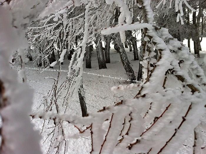 La neige et le givre sur les branches d'arbres d'Aubrac, côté Lozère
