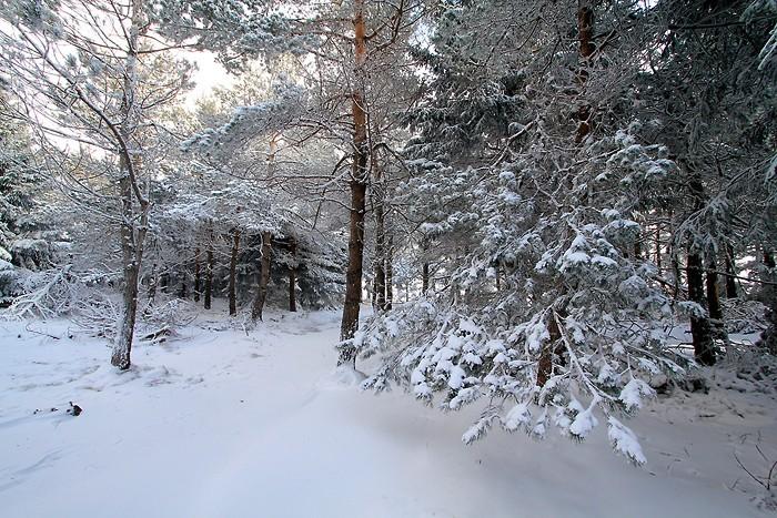 Neige sur l'Aubrac