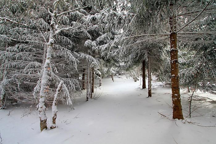 Balade dans la neige sur l'Aubrac