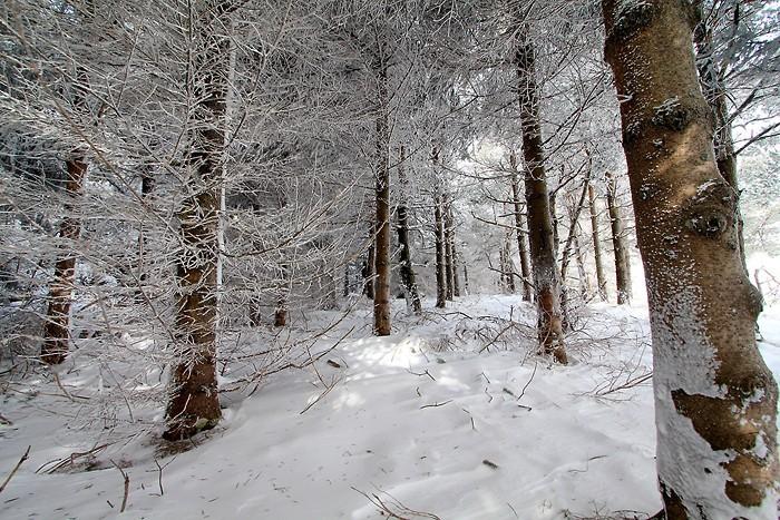 Un beau paysage de neige sur l'Aubrac