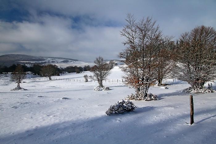 Neige sur le plateau de l'Aubrac