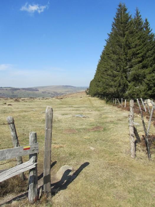 GR de Pays du Tour des Monts d'Aubrac, du côté Lozère, près du Col de Bonnecombe