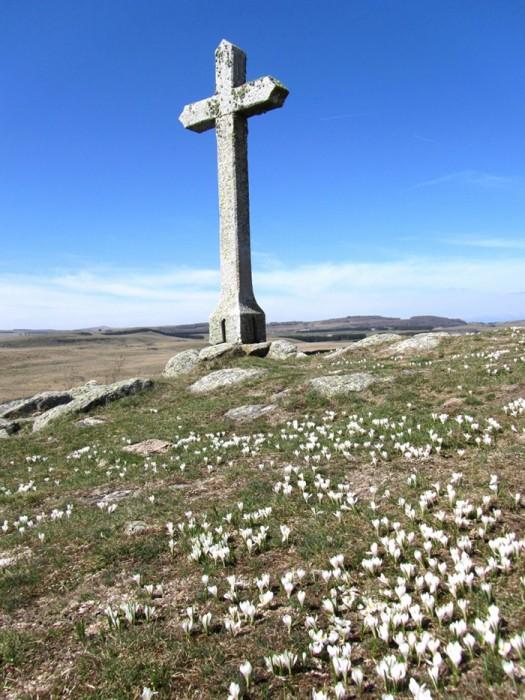 Crocus sous la croix dominant le lac de Saint Andéol sur l'Aubrac
