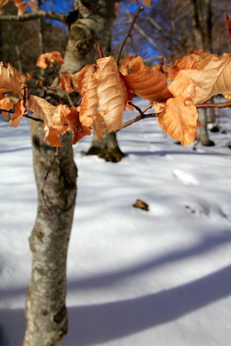 Encore quelques feuilles sur les arbres