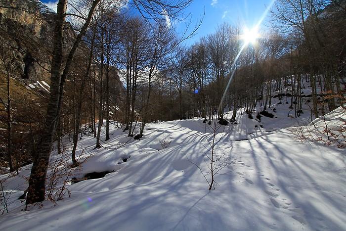 Balade dans le bois de Saint-Savin