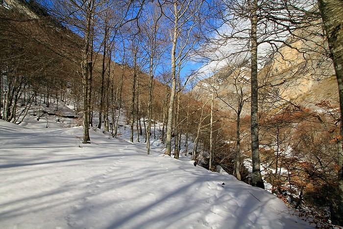 Bois de Saint-Savin dans les Hautes-Pyrénées