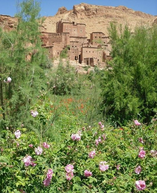 Randonn�e p�destre : Trekking  La Vall�e des Roses Maroc