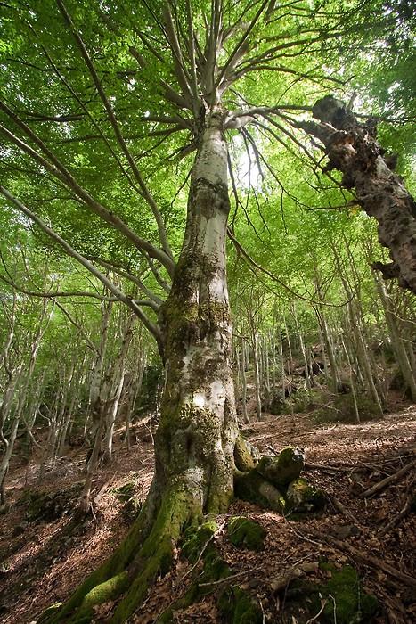 Magnifique forêt dans les Hautes-Pyrénées