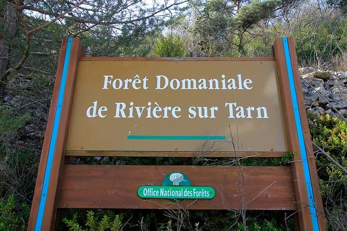 Forêt domaniale de Rivière sur Tarn