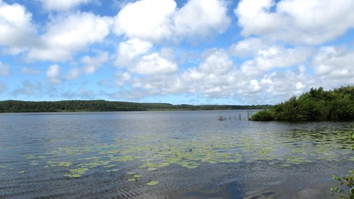 L'étang de Léon, entrée du courant d'Huchet
