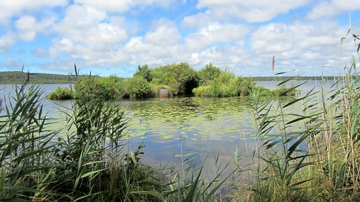 L'étang de Léon, début du courant d'Huchet