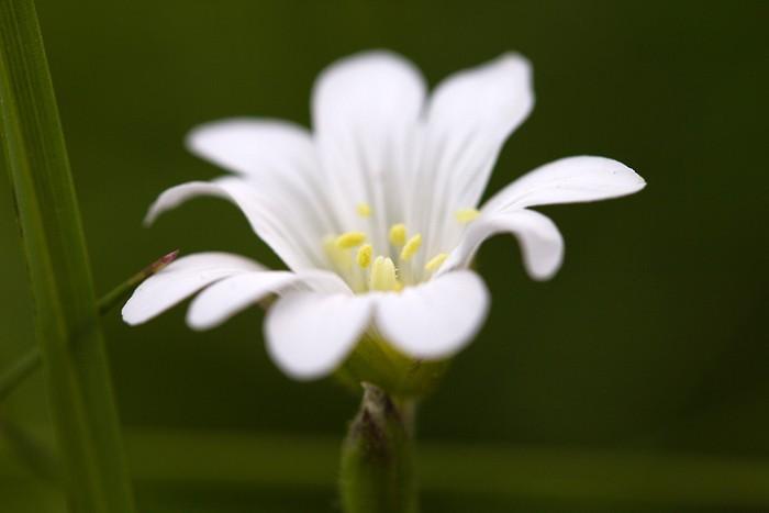 D�couverte : Fleurs des Pyr�n�es