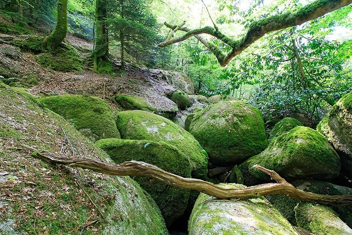 Balade : Balade dans la forêt de Huelgoat
