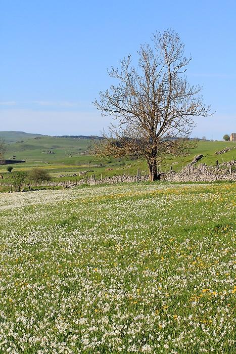 Les fleurs sont de sortie sur le plateau de l'Aubrac