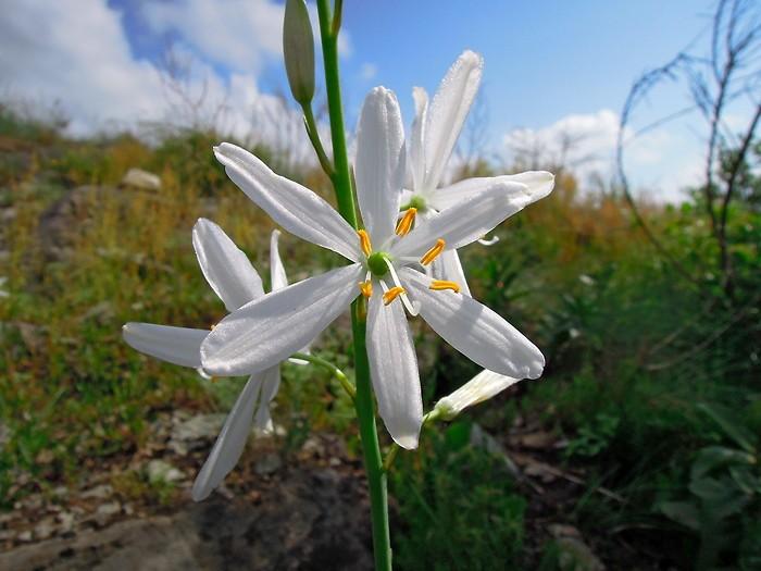 Jolie fleur au détour du GR 65