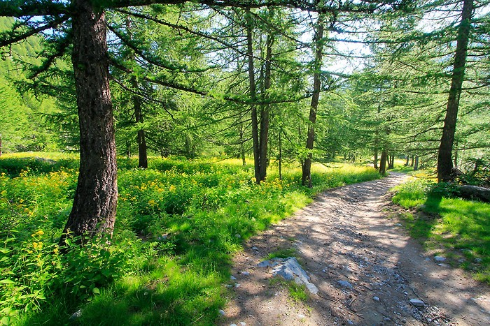 Jolie forêt dans les Hautes-Alpes