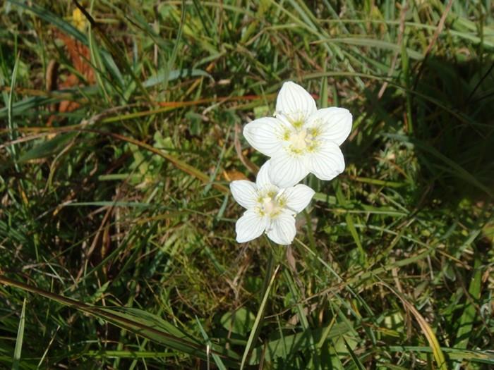 Fleurs sur Aubrac