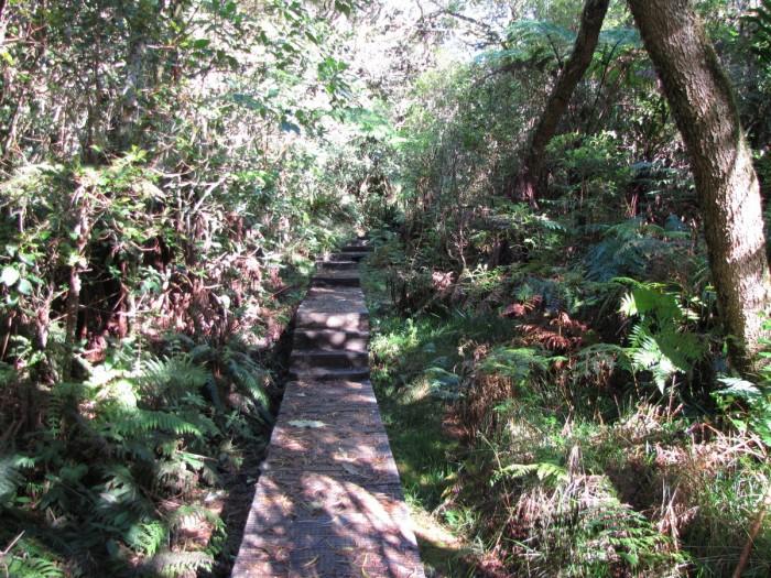Caillebotis dans la forêt de Bélouve