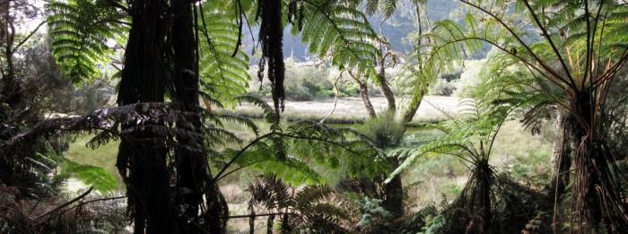 La Grande Mare dans la forêt de Bélouve