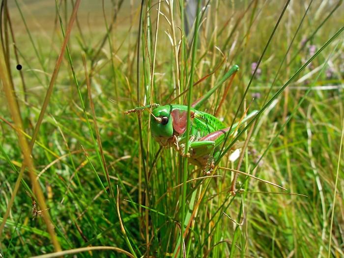 Très vert, on le confondrait presque avec l'herbe !