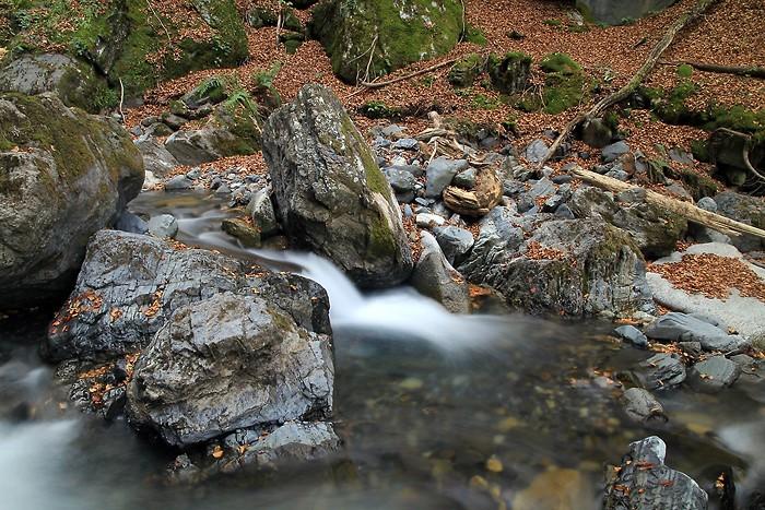 Cours d'eau dans la forêt du Bué