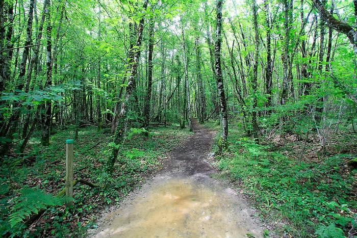 La balade continue dans la forêt