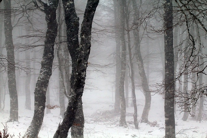 Progression dans le brouillard