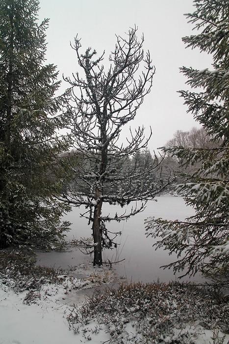Lac gelé en Aubrac
