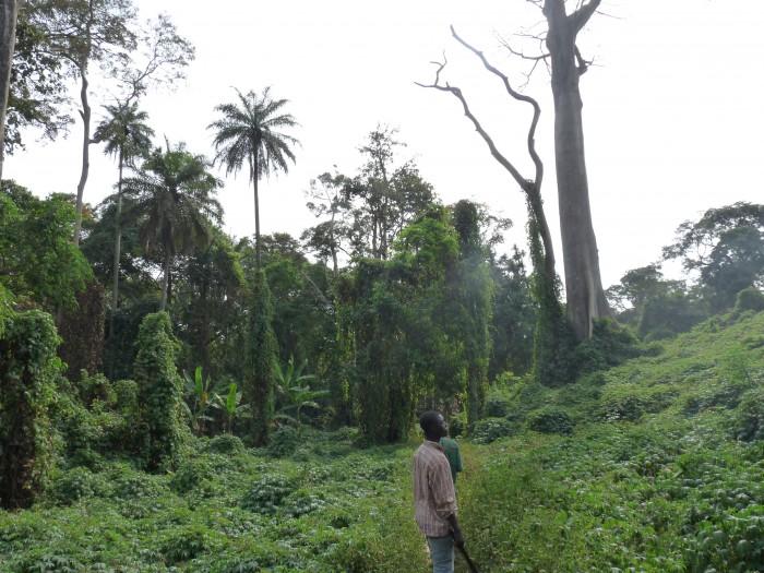 Trekking au Ghana