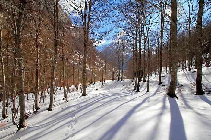 Raquettes à neige dans le bois de Saint Savin