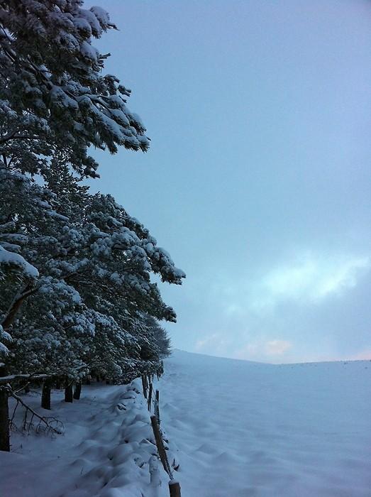 Neige et sapins sur l'Aubrac