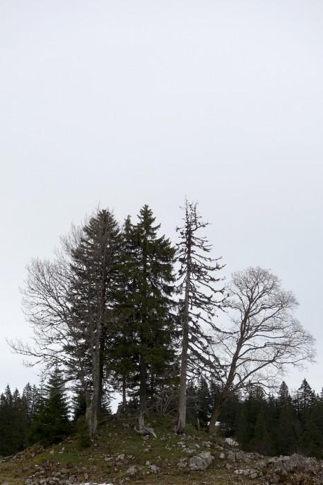 Monticule d'arbres