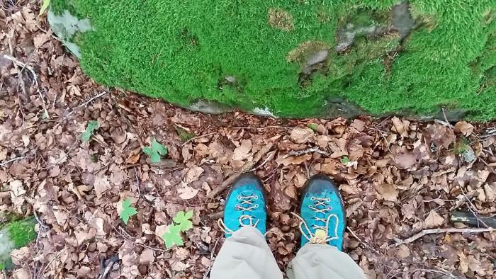 Déjà un tapis de feuilles d'automne