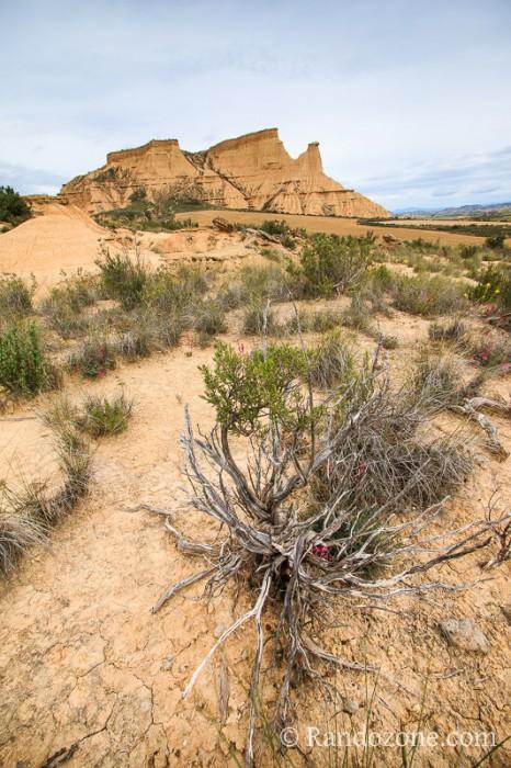 Paysage du désert des Bardenas en Espagne