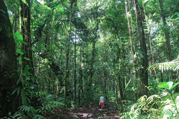 Randonnée : Randonnée sur le sentier de la maison de la forêt