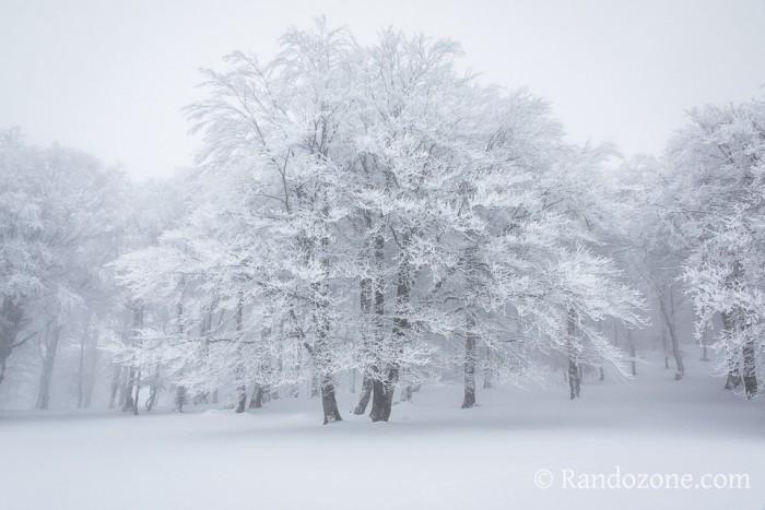 Randonn�e p�destre : Balade � c�t� de la station de ski de fond de Laguiole