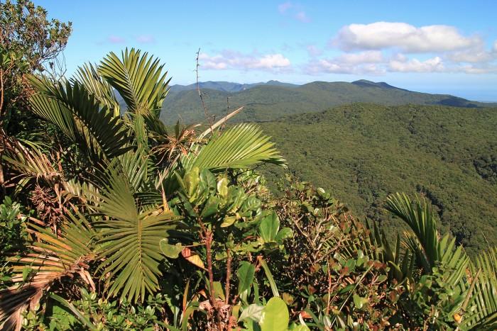 Randonnée : Randonnée à la Mamelle de Petit Bourg