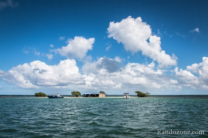 A la découverte de la mangrove avec Blue Lagoon