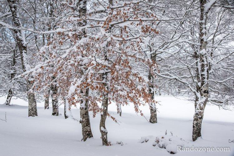 Balades en hiver sur Aubrac
