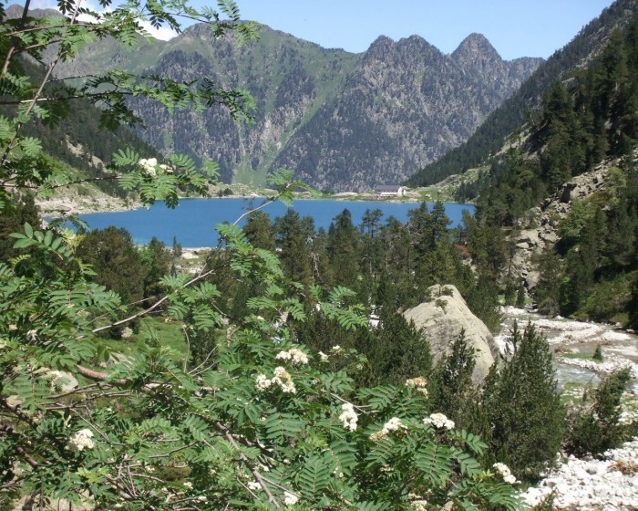 Sorbier au dessus du lac de Gaube