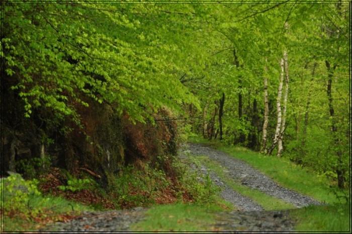 La piste du bois du Boustu